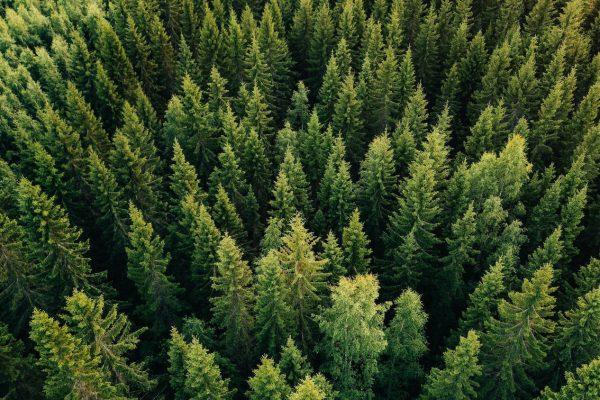 Chancen und Risiken nachhaltiger Geldanlagen – ein Interview mit dem Portfoliomanagementteam für Nachhaltigkeit